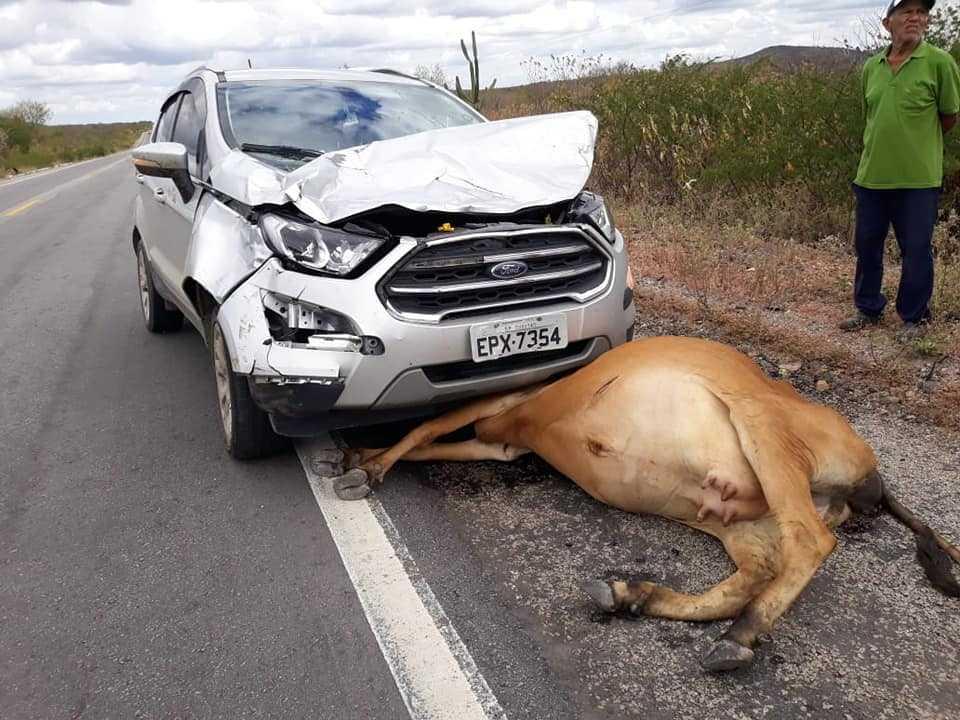 Carro bate em vaca que atravessava rodovia do interior de Pernambuco