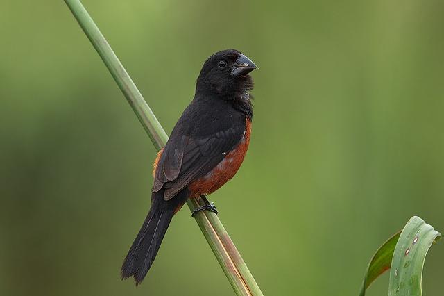 Venda e criação de pássaros poderá ser autorizada no Estado de Pernambuco