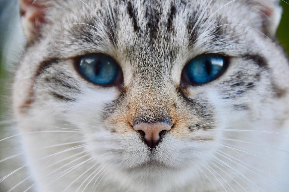 Caso de gato que contraiu coronavírus é registrado na Bélgica