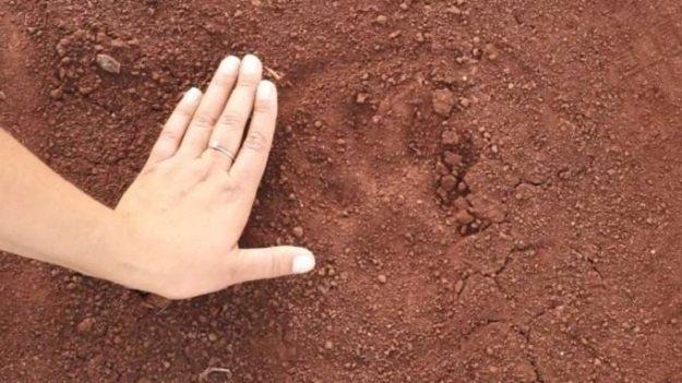 Leão e Onça são vistos em Nova Aurora e autoridades do Paraná instalam armadilhas