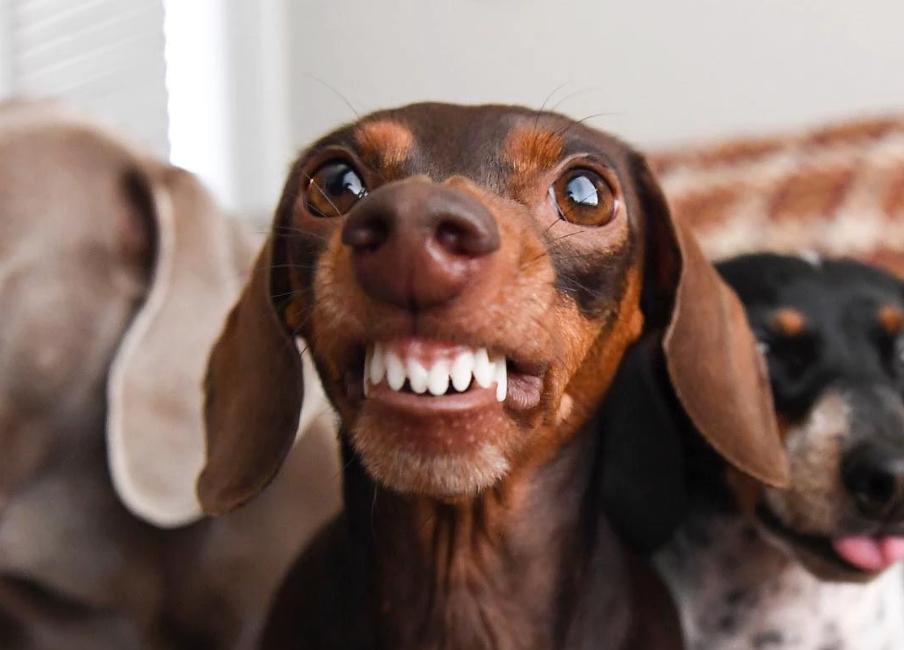 Vereadores aprovam multa de 23 mil em lei que proíbe cachorro latir
