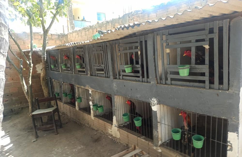 Polícia fecha rinha de galo após denúncia